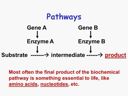 Pathways Gene A Gene B Enzyme A Enzyme B Substrate -------  intermediate ------  product Most often the final product of the biochemical pathway is something.