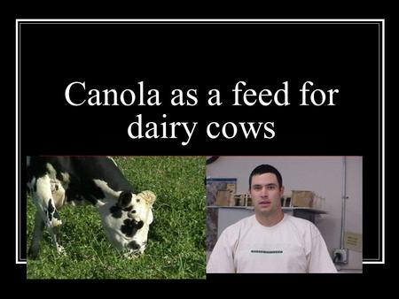 Canola as a feed for dairy cows. Canola defined The official definition of canola is a rape plant of an imporved variety having seeds that are low in.