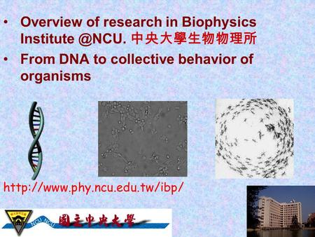 Overview of research in Biophysics 中央大學生物物理所 From DNA to collective behavior of organisms