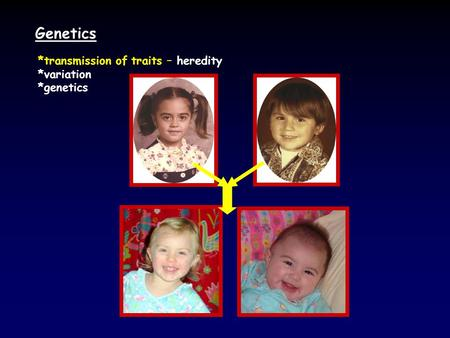 Genetics *transmission of traits – heredity *variation *genetics.
