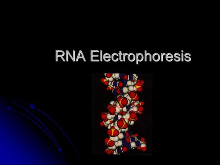 RNA Electrophoresis. Broad and Long Term Objective To characterize the expression of ribulose 1-5 bisphosphate carboxylase oxygenase and chlorophyll AB.