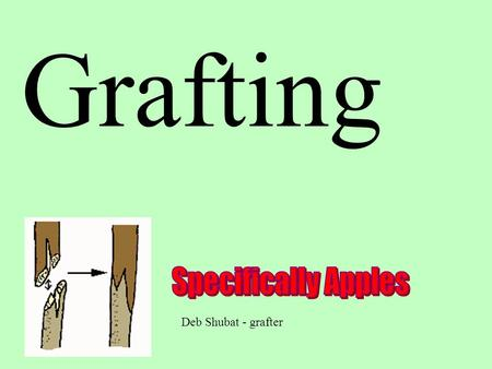 Grafting Deb Shubat - grafter. History Earliest evidence of grafting recorded on tablets were found in Mesopotamia at Mari 3800 years ago.