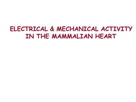 ELECTRICAL & MECHANICAL ACTIVITY IN THE MAMMALIAN HEART.