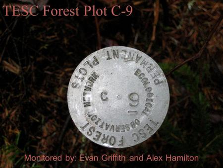 Monitored by: Evan Griffith and Alex Hamilton TESC Forest Plot C-9.