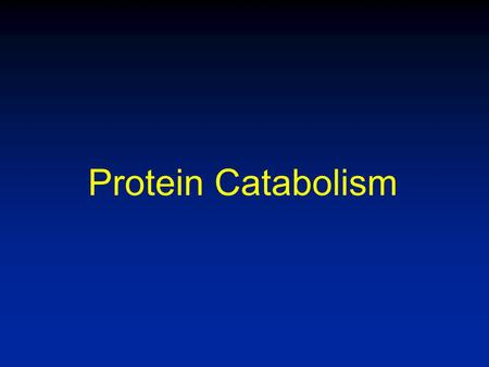 Protein Catabolism. Overview of Protein Catabolism Proteases are zymogens Excess amino acids are not stored Normal protein turnover 1-2% of body protein.