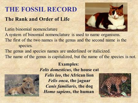 THE FOSSIL RECORD The Rank and Order of Life Latin binomial nomenclature A system of binomial nomenclature is used to name organisms. The first of the.
