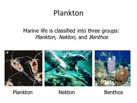 Marine life is classified into three groups: Plankton, Nekton, and Benthos Plankton NektonPlankton Benthos.