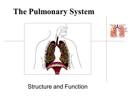 The Pulmonary System Structure and Function. Lungs Lung tissue weighs 1 kg and covers half a tennis court (50-100 square feet) Lung tissue is 20-50 times.