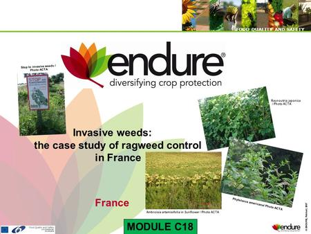 © ENDURE, February 2007 FOOD QUALITY AND SAFETY © ENDURE, February 2007 FOOD QUALITY AND SAFETY Invasive weeds: the case study of ragweed control in France.