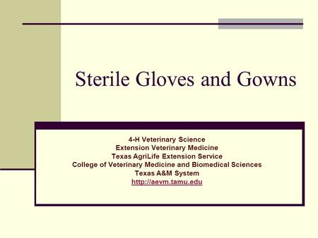 Sterile Gloves and Gowns 4-H Veterinary Science Extension Veterinary Medicine Texas AgriLife Extension Service College of Veterinary Medicine and Biomedical.