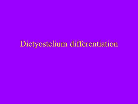 Dictyostelium differentiation. Announcements *next two lab. sessions are Dictyostelium…. *we will meet next week to update on our experiment and take.