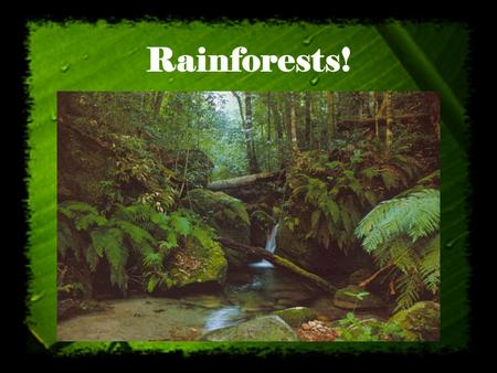 Rainforests! http://www.rainforestinfo.org.au/background/rainfwld.htm.