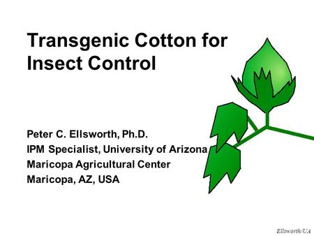 Ellsworth/UA Transgenic Cotton for Insect Control Peter C. Ellsworth, Ph.D. IPM Specialist, University of Arizona Maricopa Agricultural Center Maricopa,