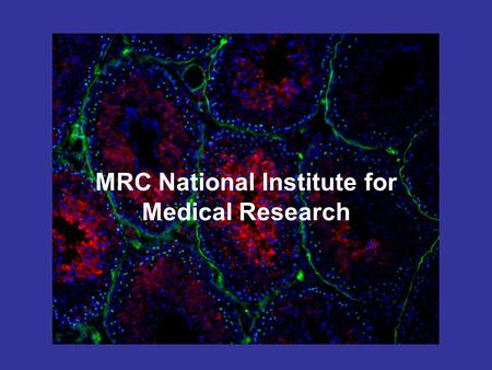 MRC National Institute for Medical Research. Outline of talk Who am I? What do I study? What does my work involve? Further education and careers in science.