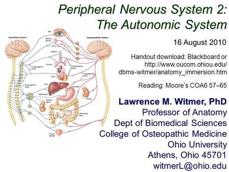 Peripheral Nervous System 2: The Autonomic System Lawrence M. Witmer, PhD Professor of Anatomy Dept of Biomedical Sciences College of Osteopathic Medicine.