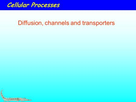 Cellular Processes Diffusion, channels and transporters.