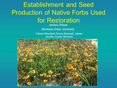 Establishment and Seed Production of Native Forbs Used for Restoration Jessica Wiese Montana State University Fabian Menalled, Bruce Maxwell, James Jacobs,