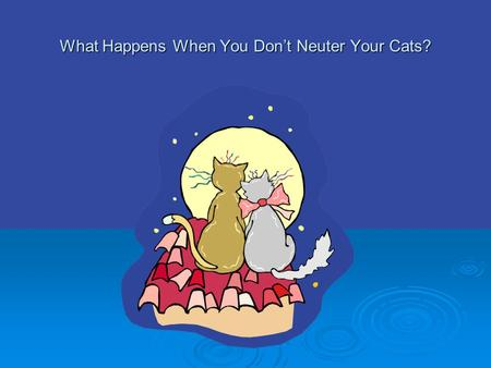What Happens When You Don't Neuter Your Cats?.