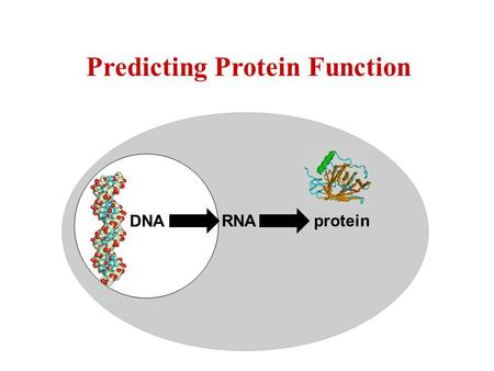 Protein RNA DNA Predicting Protein Function. Biochemical function (molecular function) What does it do? Kinase??? Ligase??? Page 245.