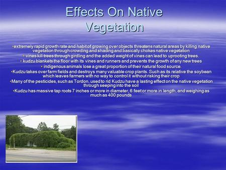 Effects On Native Vegetation extremely rapid growth rate and habit of growing over objects threatens natural areas by killing native vegetation through.