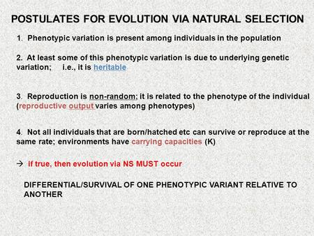 POSTULATES FOR EVOLUTION VIA NATURAL SELECTION 1. Phenotypic variation is present among individuals in the population 2. At least some of this phenotypic.