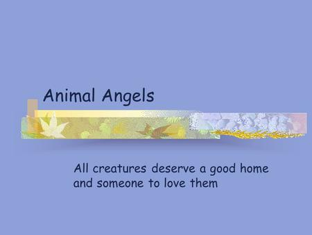 Animal Angels All creatures deserve a good home and someone to love them.
