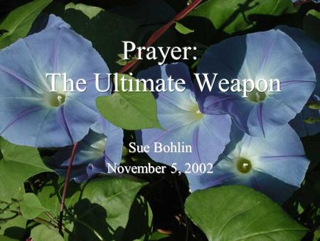 Sue Bohlin November 5, 2002. …With all prayer and petition pray at all times in the Spirit, and with this in view, be on the alert with all perseverance.