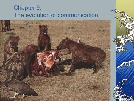 Chapter 9. The evolution of communication.. Hyena social behavior Hyenas live in social groups called clans. Clan members defend a territory and hunt.