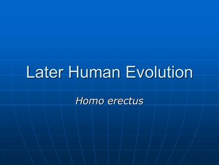 Later Human Evolution Homo erectus.