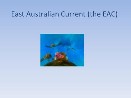 East Australian Current (the EAC). Where is it? EAC Properties Warm, deep, fast, nutrient poor water 100 km wide by 500km deep 30 million m 3 /s transport!