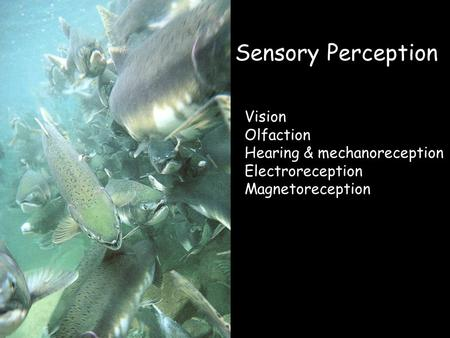 Sensory Perception Vision Olfaction Hearing & mechanoreception Electroreception Magnetoreception.