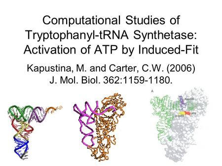 Computational Studies of Tryptophanyl-tRNA Synthetase: Activation of ATP by Induced-Fit Kapustina, M. and Carter, C.W. (2006) J. Mol. Biol. 362:1159-1180.