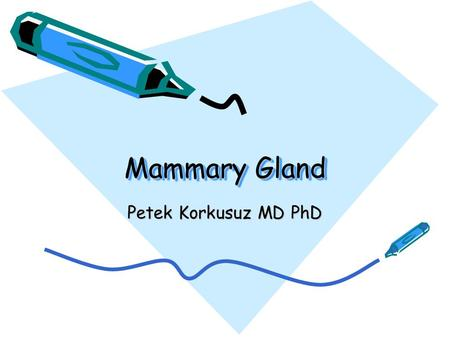 Mammary Gland Petek Korkusuz MD PhD.
