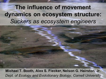The influence of movement dynamics on ecosystem structure: Suckers as ecosystem engineers Michael T. Booth, Alex S. Flecker, Nelson G. Hairston, Jr. Dept.