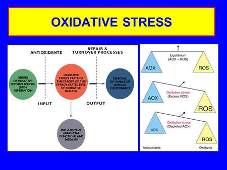 OXIDATIVE STRESS. INDUCTION OF OXIDATIVE STRESS Glutathione conjugation MalnutritionMutation Phagocytic activation Tissue damageSmoking.