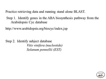 Practice retrieving data and running stand alone BLAST. Step 1. Identify genes in the ABA biosynthesis pathway from the Arabidopsis Cyc database