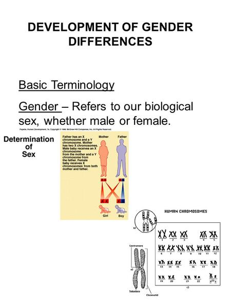DEVELOPMENT OF GENDER DIFFERENCES Basic Terminology Gender – Refers to our biological sex, whether male or female.