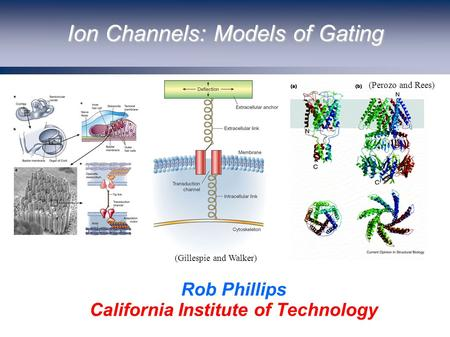 Ion Channels: Models of Gating Rob Phillips California Institute of Technology (Perozo and Rees) (Gillespie and Walker)
