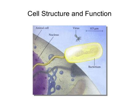 Cell Structure and Function. Why are cells small?
