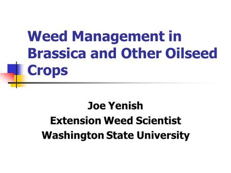 Weed Management in Brassica and Other Oilseed Crops Joe Yenish Extension Weed Scientist Washington State University.