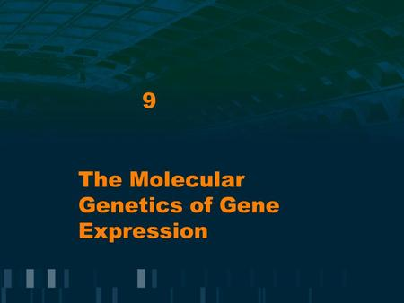 The Molecular Genetics of Gene Expression