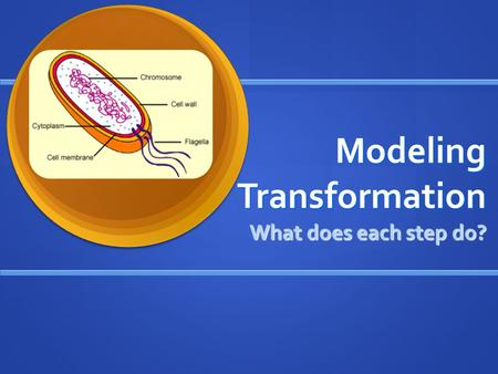 Modeling Transformation What does each step do?. Transformation Procedure.