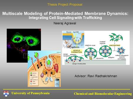 University of Pennsylvania Chemical and Biomolecular Engineering Multiscale Modeling of Protein-Mediated Membrane Dynamics: Integrating Cell Signaling.