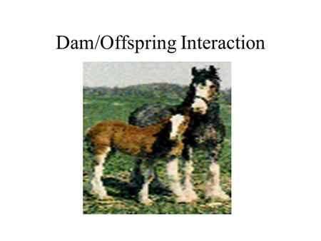 "Dam/Offspring Interaction. What type of relationship is it? –Care giving and care seeking Giving on the part of the mother, known as ""Maternal"" Care seeking."