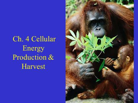 Ch. 4 Cellular Energy Production & Harvest. Energy = First law of thermodynamics = energy cannot be created or destroyed. It can be converted to different.