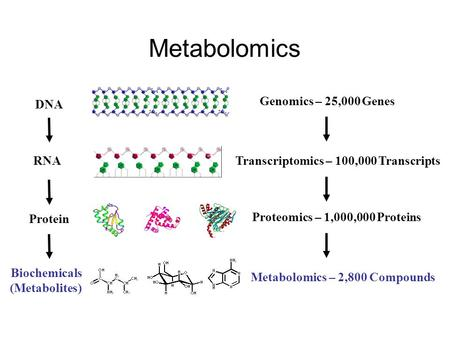 Metabolomics DNA RNA Protein Biochemicals (Metabolites) Genomics – 25,000 Genes Transcriptomics – 100,000 Transcripts Metabolomics – 2,800 Compounds Proteomics.