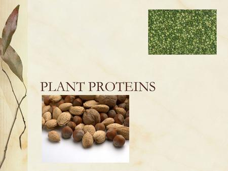 PLANT PROTEINS VARIETIES LEGUMES Edible peas or beans (seeds) of a pod Good source of lysine Poor source of tryptophan and sulfur containing amino acids.