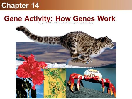 Gene Activity: How Genes Work