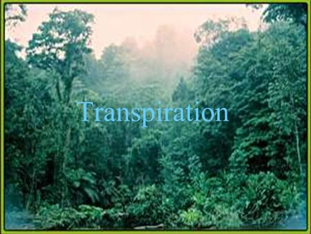 Transpiration. Is the process in which the plant losses water vapor.