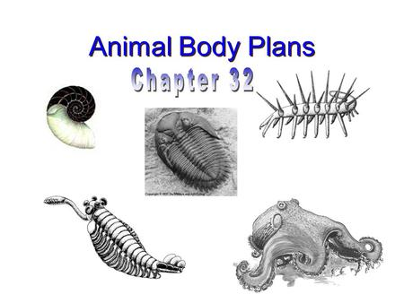 Animal Body Plans Chapter 32.